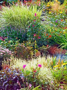 thompson-morgan-perennial-border-collection-lucky-dip-10-x-1-litre-plants