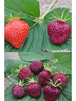 thompson-morgan-strawberry-cherry-berry-7cm-pot-x-6