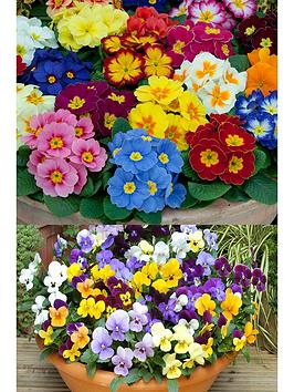 thompson-morgan-tampm-lucky-dip-winter-bedding-30-garden-ready-plants