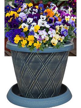 thompson-morgan-viola-sorbet-xp--nbsp27cm-preplanted-hanging-basket
