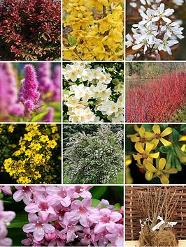 thompson-morgan-bumper-shrub-collection-10-bare-root-plants