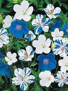 thompson-morgan-geranium-hardy-blues-6-bare-roots