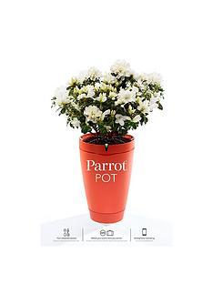 parrot-pot-brick