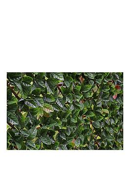 witchgrass-autumn-hedging-trellis-1m-x-2m
