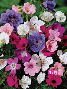 thompson-morgan-geranium-hardy-sanguineum-collection-6-bare-roots