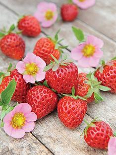 thompson-morgan-strawberry-just-add-cream-12-bare-roots