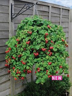 thompson-morgan-raspberry-ruby-falls-2-9cm-pots