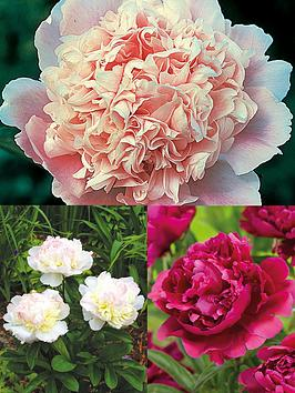 Photo of Thompson & morgan peony collection 3 bare roots
