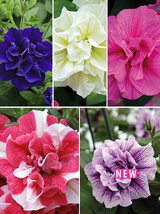 thompson-morgan-petunia-frill-and-spills-collection-20-plants