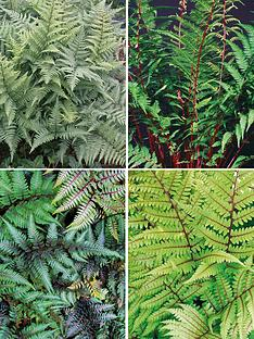 thompson-morgan-fern-athyrium-collection-9cm-pot-x-4-contains-1-each-of-vidalii-ursula039s-red-lady-in-red-ghost