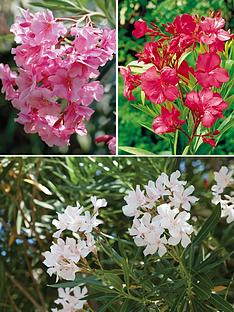 thompson-morgan-oleander-collection-14cm-pot-x-3-contains-1-each-of-pink-white-amp-red