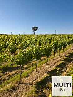 virgin-experience-days-sparkling-wine-vineyard-tour-with-tastings-for-two-innbspditchling-east-sussex