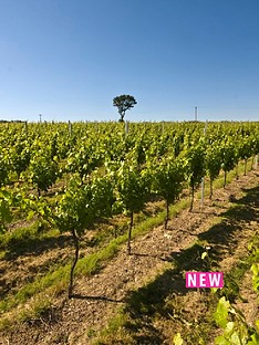 virgin-experience-days-sparkling-wine-vineyard-tour-with-tastings-for-two