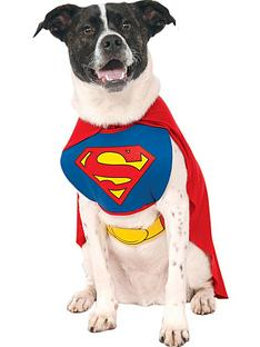 superman-dog-costume-super-man