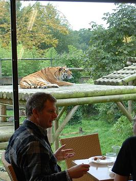 virgin-experience-days-afternoon-tea-with-the-tigers-for-two-in-broxbourne-hertfordshirenbsp