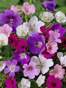 handy-geranium-mixed-x-5-bare-roots