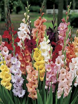 Compare retail prices of 100 Glamourous Gladioli Bulbs to get the best deal online
