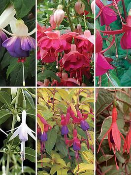 handy-fuchsia-collection-6x9-cm-varieties