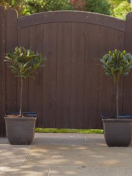 pair-11-square-gold-tulipa-style-planters