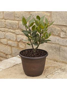 kitchen-bay-bush-1l-pot