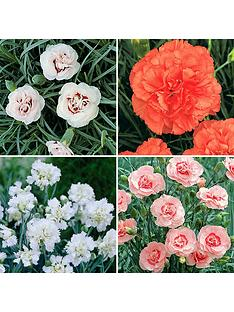 you-garden-hardy-devon-pinks-collection-pack-of-12