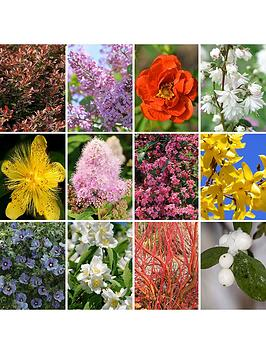 hardy-shrub-collection-x-12-bare-root-bushes