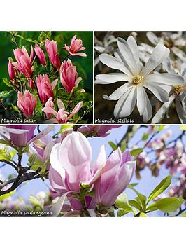 fragrant-magnolia-collection-3x-9cm-potted-plants
