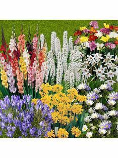 you-garden-300-summer-flowering-bulbs-in-7-varieties