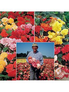 giant-belgian-begonia-tubers-10-upright-and-10-trailling