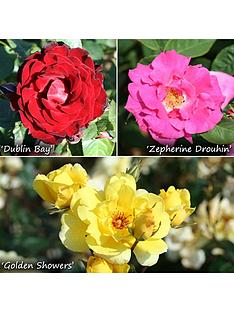 climbing-rose-collection-x-3-bushes-bare-root