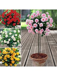 you-garden-patio-standard-roses-collection-x-4-bare-roots