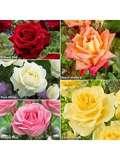you-garden-best-ever-hybrid-tea-rose-collection-x-5-bare-root-roses