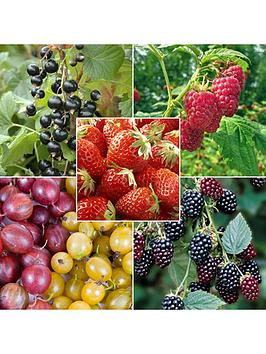 complete-patio-fruit-collection-21-plants-in-5-types
