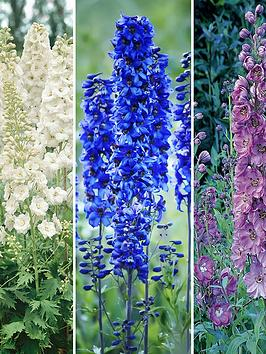 delphinium-collection-3-x9cm-pots