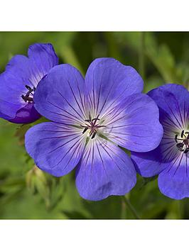 pair-of-hardy-geranium-039rozanne039-2l-potted-plants