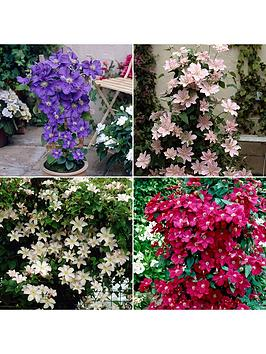 pair-of-boulevard-patio-clematis-3l-potted-plants