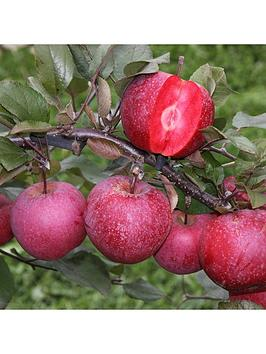 apple-tree-tickled-pink-75l-potted-plant-14m-tall