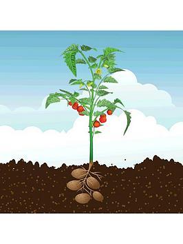 potatom-2-in-1-potato-amp-tomato-plant-13cm-pot