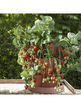 set-of-4-strawberry-grow-in-pods-with-4-strawberry-039buddy039-tray-plants