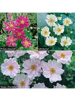 hardy-japanese-anemone-collection-3-x-9cm-potted-plants