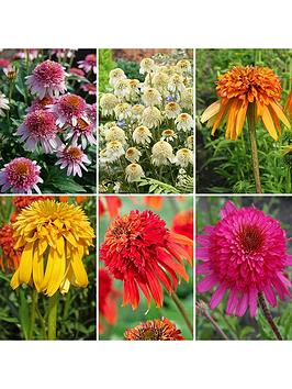 hardy-echinacea-collection-6-x-garden-ready-plugs