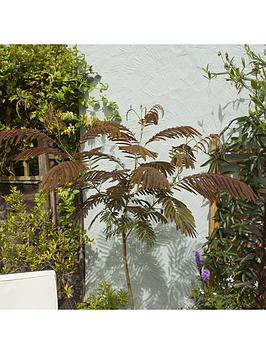 albizia-summer-chocolate-3l-potted-plant-60cm-tall