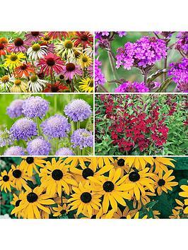 20-garden-ready-perennials