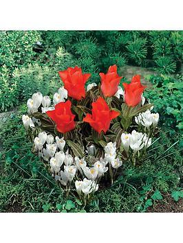 plant-o-mat-heart-shaped-tulip-crocus-planter-21-bulbs