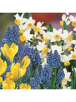 plant-o-mat-balcony-beauty-mix-38-bulbs-planter