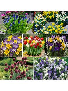 complete-300-bulb-garden-7-varieties-autumn-planting-for-spring-colour