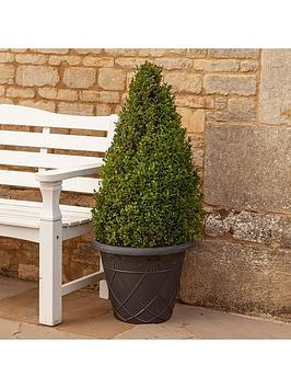 premium-buxus-topiary-pyramid-11m