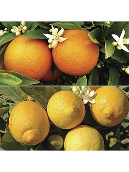 orange-and-lemon-starter-tree-pair-in-9cm-pots