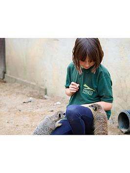 virgin-experience-days-junior-animal-keeper-experience-at-millets-falconry-centre