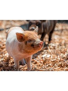 virgin-experience-days-the-pig-enthusiast-experience-at-kew-little-pigs